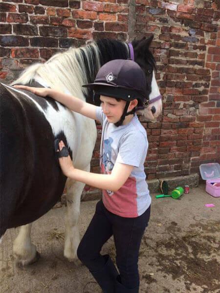 Horse grooming before we start
