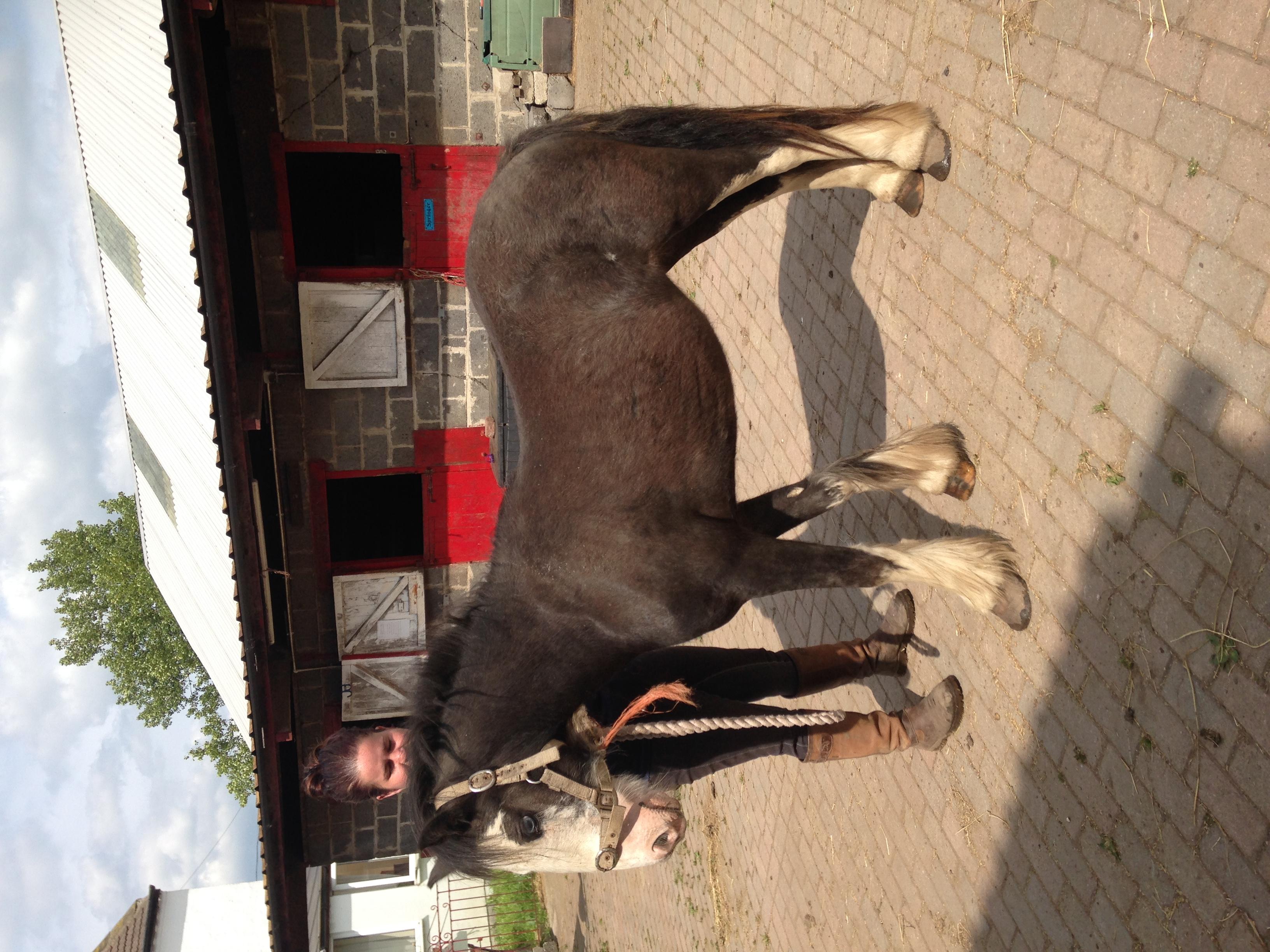 Young Ponies Fir Tree Farm Equestrian Centre