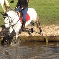 Connemara 148 Jumping Pony Fir Tree Farm Equestrian Centre